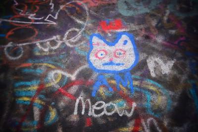 Centralia, PA---a cat