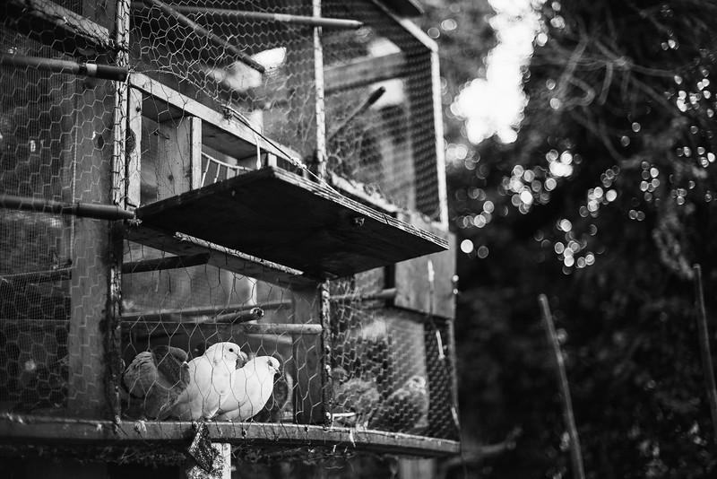 Baltimore -- Gready's bird coop on a cold night. Taken on Nov. 9, 2018.