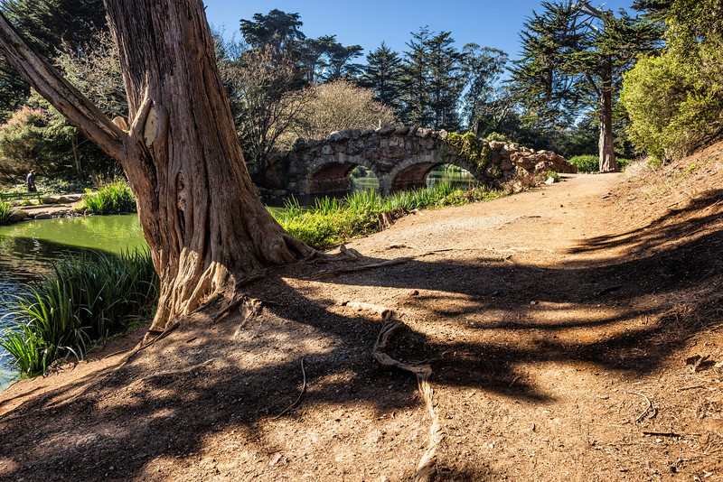 An Old Tree at Stow Lake, Golden Gate Park