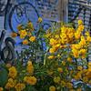 Graffiti Garden 1