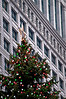 CHI 020                        <br /> The official Christmas tree of the city of Chicago in Daley Plaza.