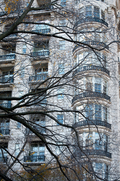CHI 030                        <br /> A Chicago highrise apartment building through a curtain of tree limbs.