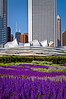 CHI 023                        <br /> A scene from Millennium Park with the Pritzker Pavilion in the background and Lurie Garden in the foreground, Chicago, IL.