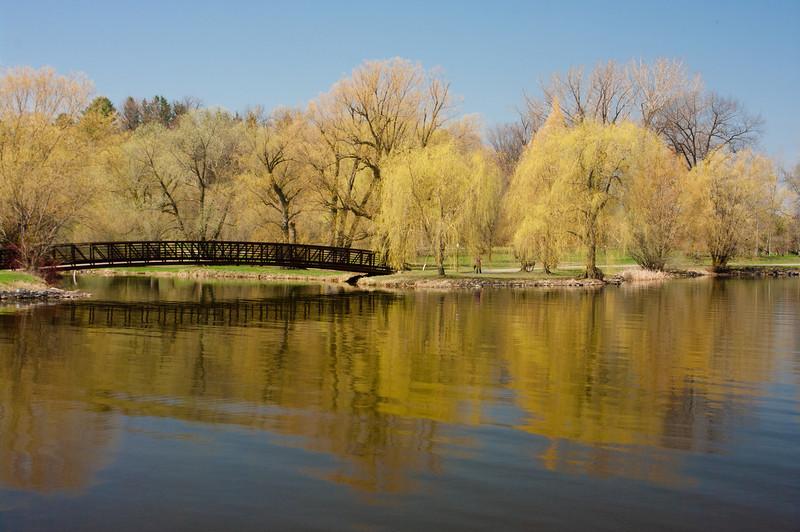 Spring Willows