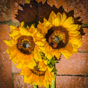 Sunflowers to make you smile!