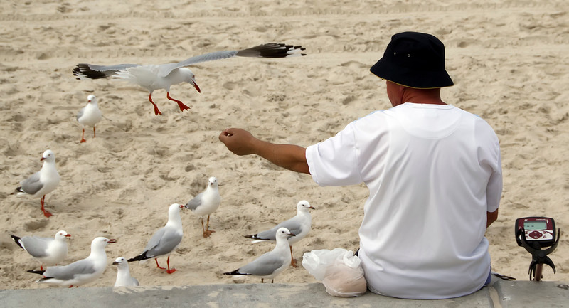 Feeding the Gulls, Gold Coast, Queensland, Australia