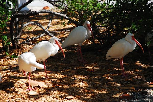 2009-12 John Pennekamp Coral Reef - Key Largo, FL
