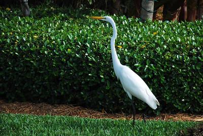 2009-12 Key West, FL