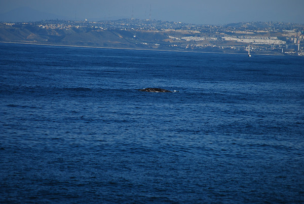2011-01 Whale Watching