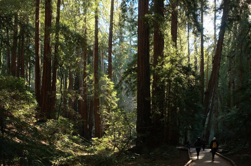 2013-01 Muir Woods