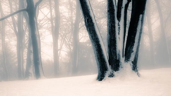 Lousberg-Bäume