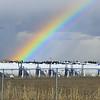 Rainbow<br /> <br /> Edmonton, Alberta