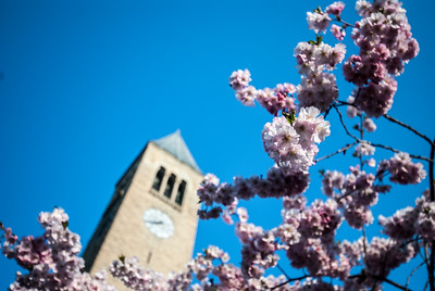 Spring blossoms signal change in the weather at Cornell University with McGraw Tower in the background.