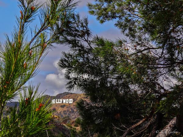 Hidden Hollywood