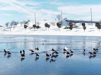 Estanque helado en Seseña, Toledo.