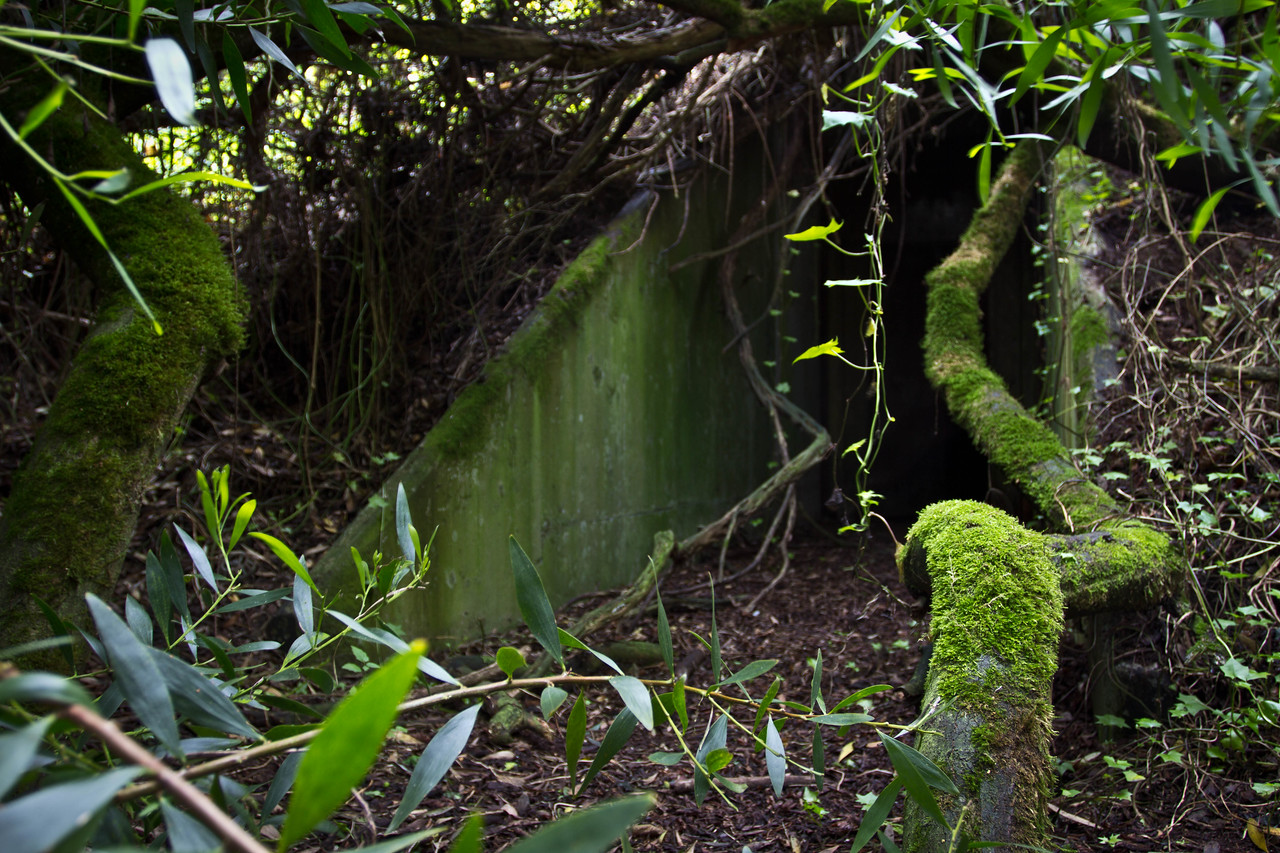 The Entrance ... well hidden by nature and 70 years of time...