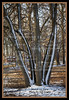 2014-03-13-Trees-Snow-JeffHouse-01 - Version 2
