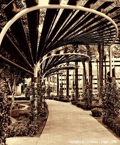 Arbor at the Phoenix City Center