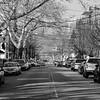 Quiet Walnut Street