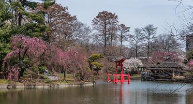 Japanese Pond Cherries