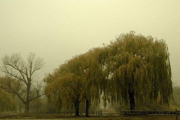 Palmer Park on a foggy day