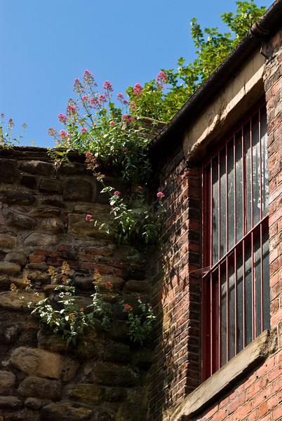 Flowers on Old City Walls, Newcastle