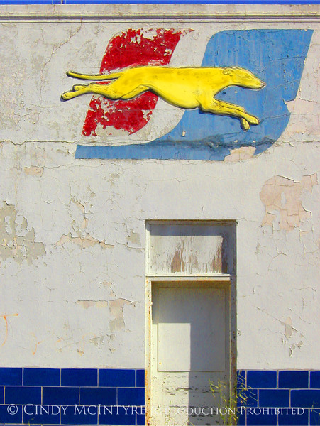 Yellow Dog, Port Arthur 5x7 copy