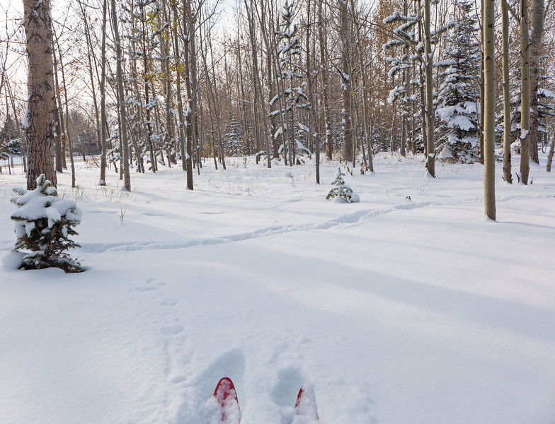Fast and easy trailbreaking through the Birthplace Forest, with 12 cm of storm snow over a 3 cm re-frozen base.