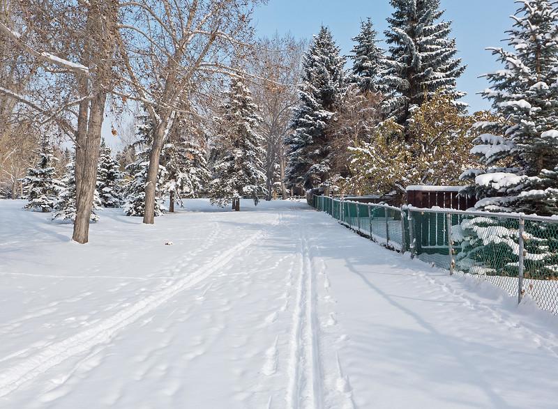 Backyard skiing!