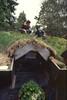 cat roof