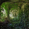 Garden of Eden II - The beautiful overgrown garden from an abandoned villa