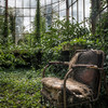 Zen - Old chair surrounded  by green