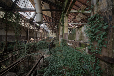 Green Factory - It is amazing to see how mother nature takes over these buildings.
