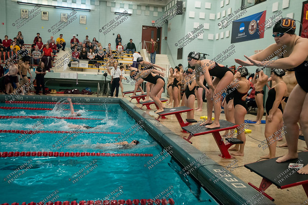 Men's and Women's Swimming
