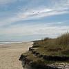 Seagulls along the Beach