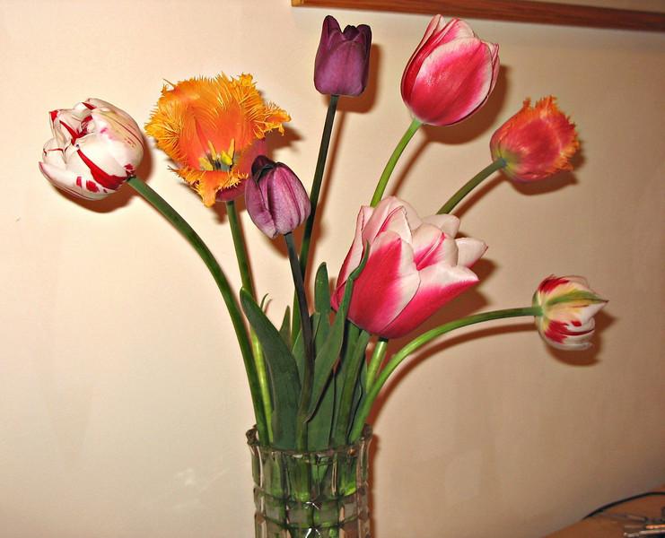 Garden tulips (2007)