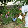 Watering the garden. (2008)