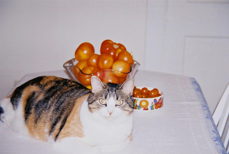 Sophie with tomatoes. (2000)