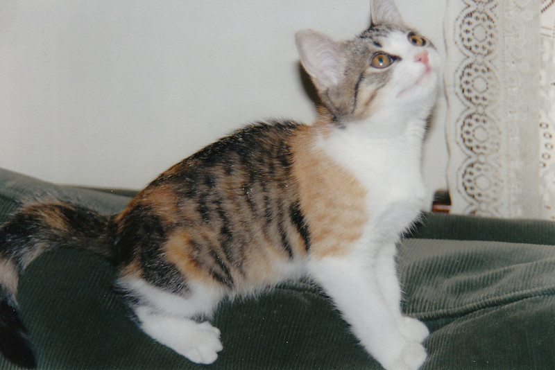 Our Sophie as a kitten.
