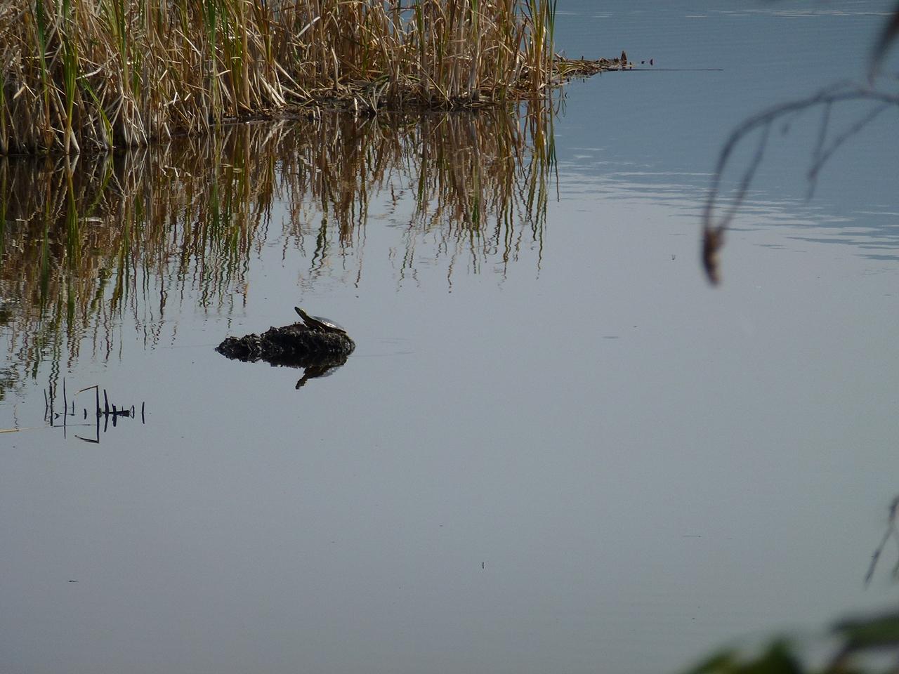 Turtle breeding lake before Canada border.