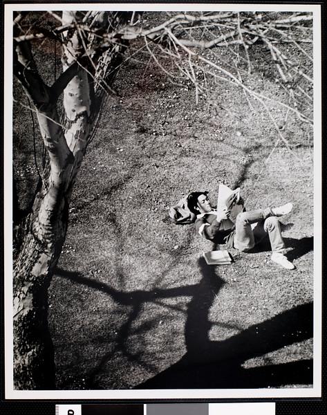 Campus scenes: studying in Alumni Memorial Park, USC, ca. 1977