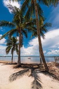 USEPPA Beach trees 3B Vert