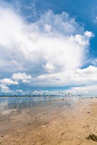 USEPPA Seagulls 1