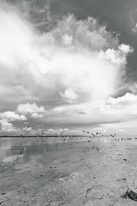 USEPPA Seagulls 1 BW