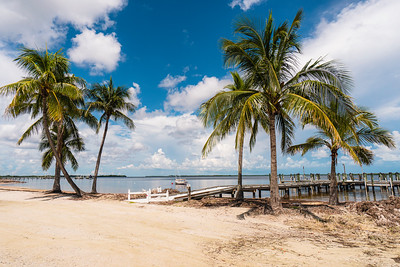 USEPPA Beach trees 5