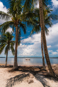 USEPPA Palms & Swan 3
