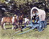 Colorized photo of Harry, his wife Margaret (left in the covered wagon) & others circa 1950.