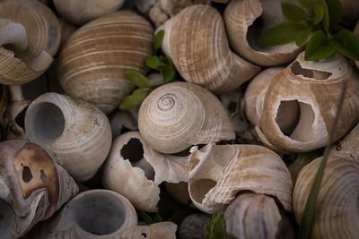 Horder av strandede sneglehus
