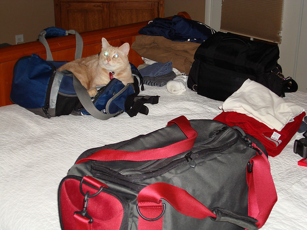 Packing the night before, Skor appears to want to come along
