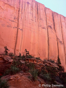 Red cliffs dwarf those tall trees